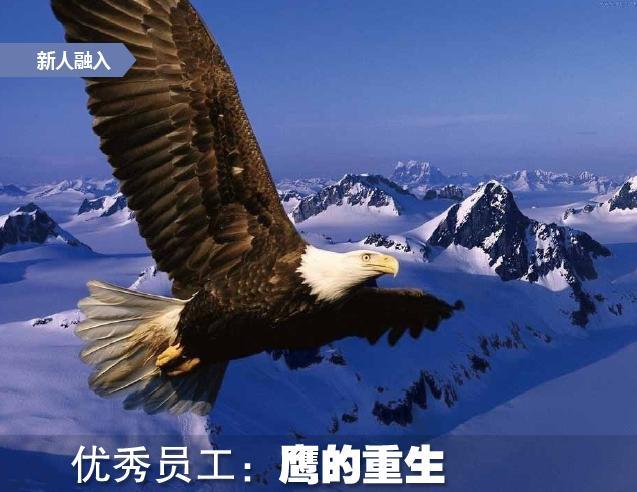 下载人下载安装鹰的重生